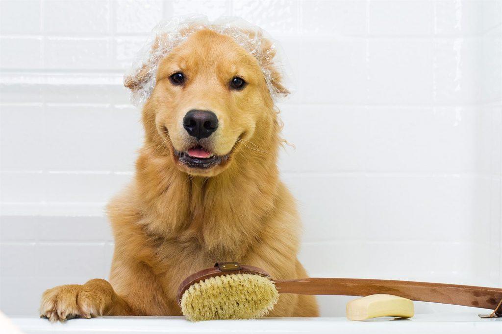 куче на плажа - баня