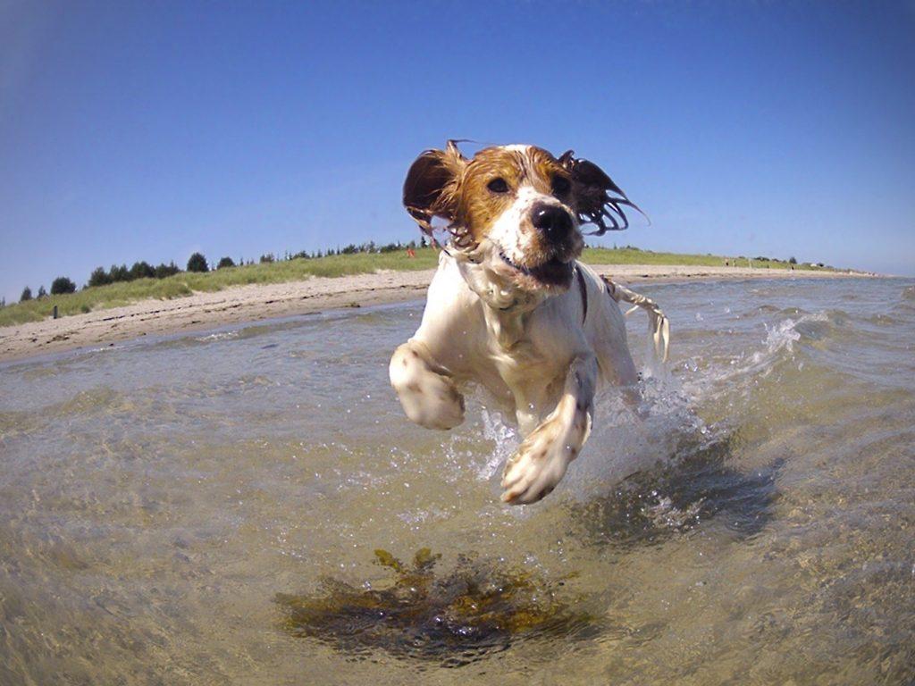куче на плажа - вода