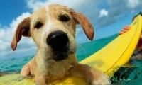 15 съвета за кучето Ви на плажа!