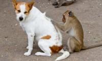 Бълхи при куче или котка